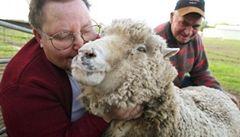 V Austrálii podlehla horku nejstarší ovce světa. Bylo jí 23 let